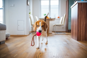 Playing on pet-friendly flooring
