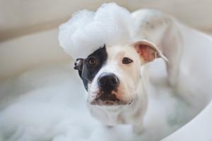 Dog In A Bath