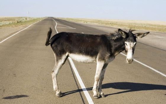 João 10: Mais burro que um jumento