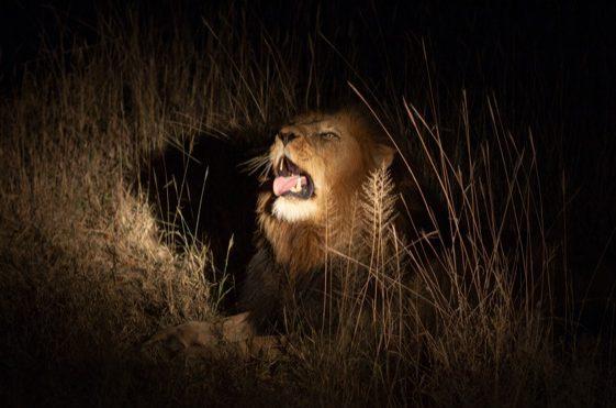 João 18: O leão se adianta