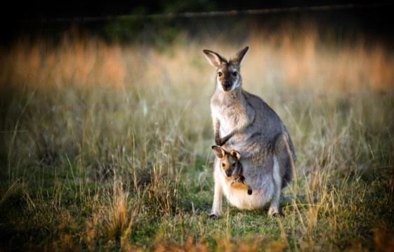 A Geração Canguru – adultos dependentes dos pais