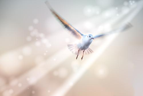 Como saber se realmente recebi o Espírito Santo?