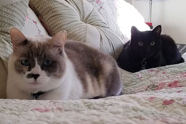 Basepaws cat OliveJune (right) with her sister LilyRose (left)