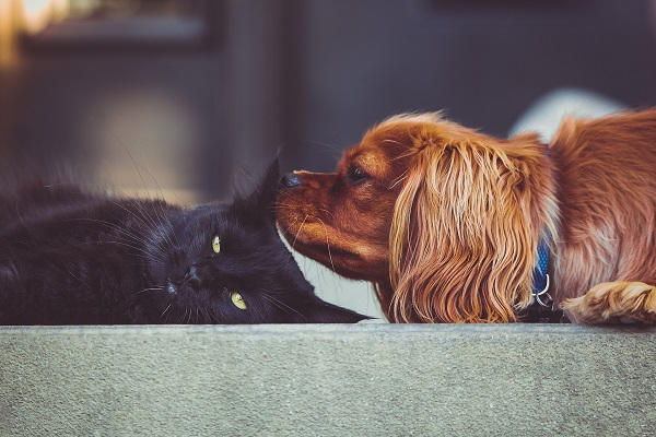 a small brown dog sniffing a black cat with yellow eyes
