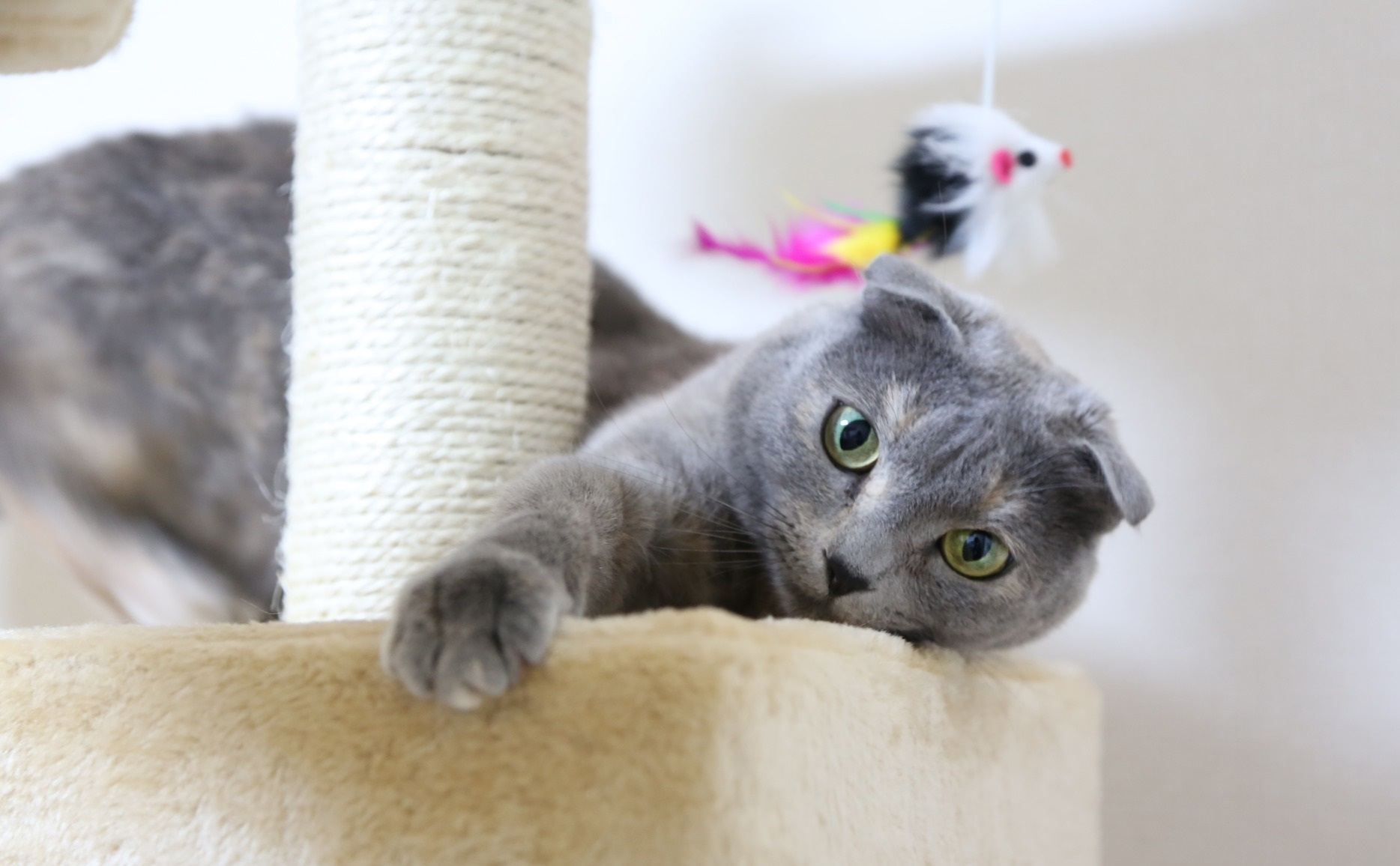 Body-Type Mutations In Cats