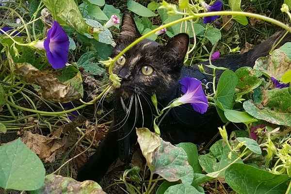 Basepaws Cats Stories: Rachel and Her Daisy