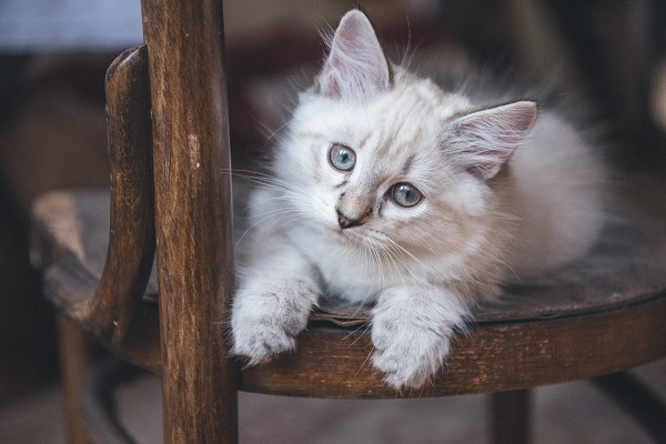 Common Feline Inherited Diseases