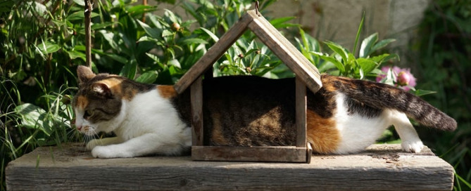 A calico cat laying weird funny outside