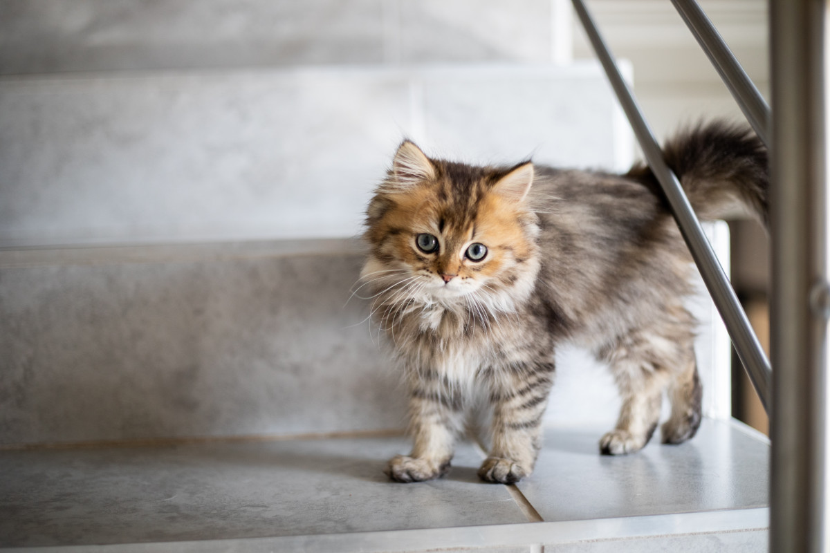A small tortie kitten on the stairs