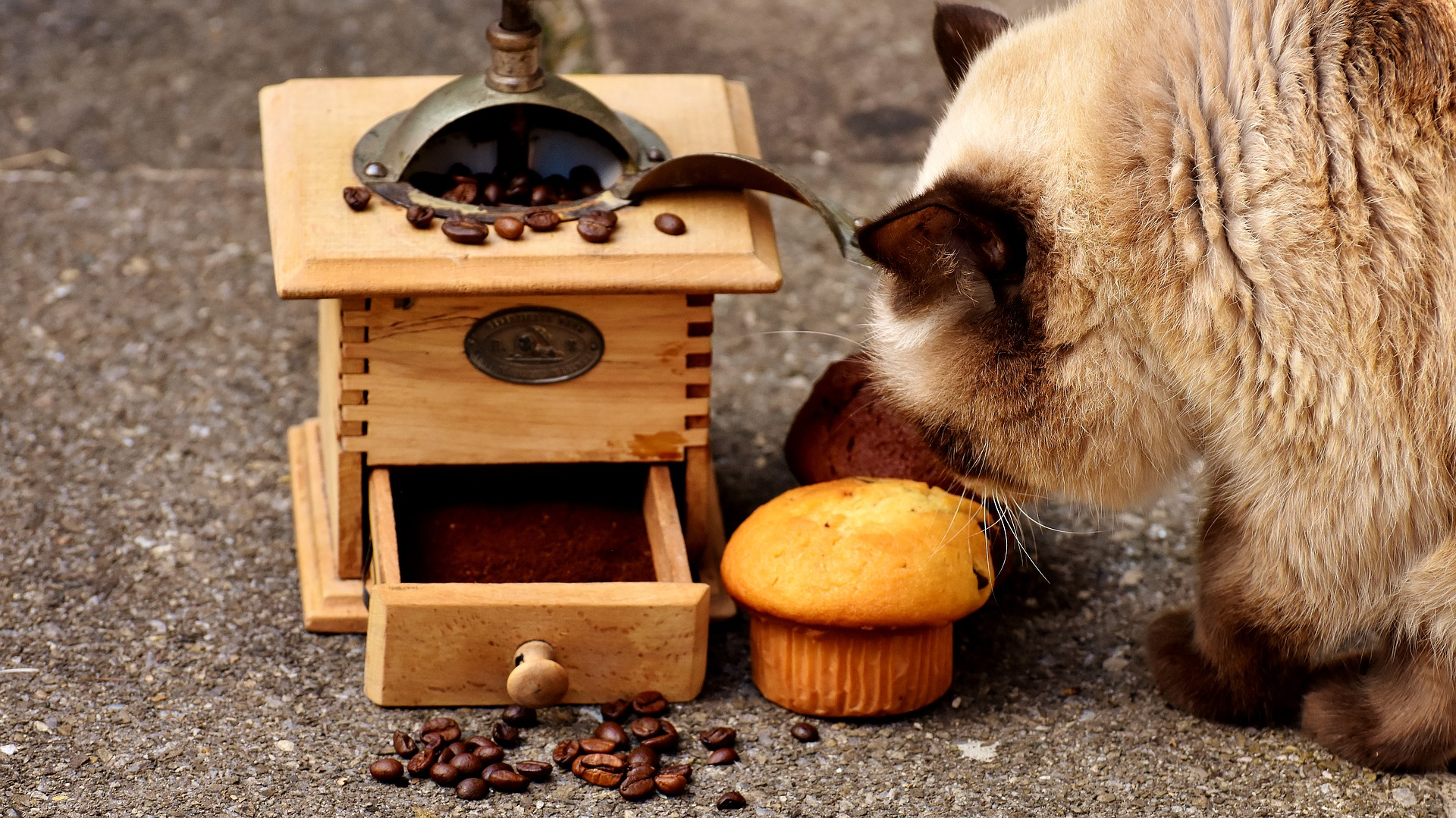 top kitty no-no's: cat eating sweets and coffee grains