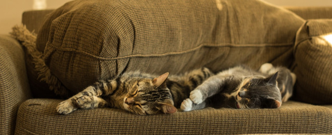 Two cats sleeping and cuddling on a brown couch