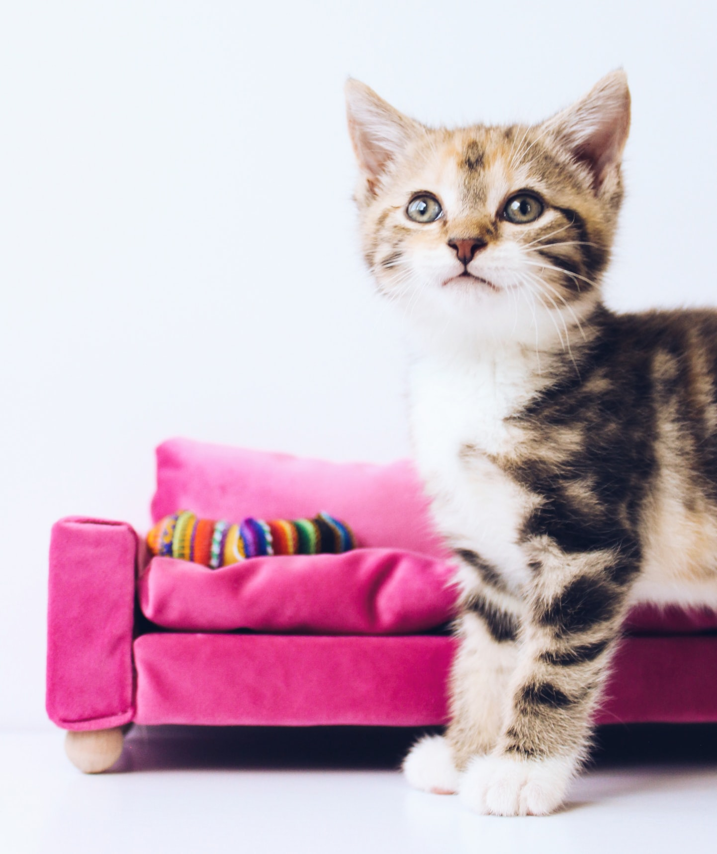 cute tabby kitten with pink couch in the background