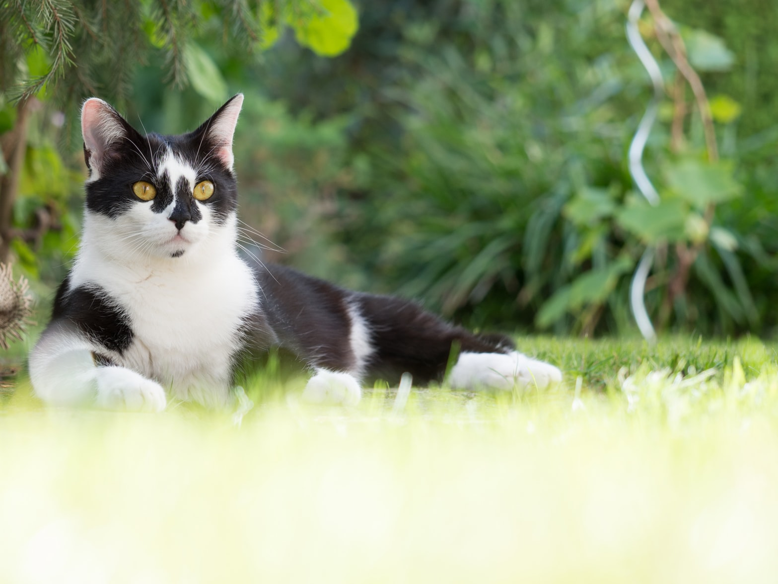 cute black and white cat with yellow eyes in nature