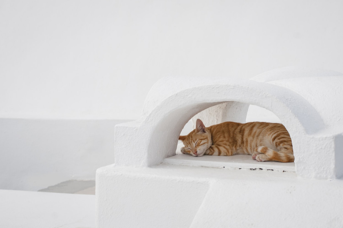 cute orange tabby cat sleeping in a white cat cave
