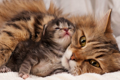 cat with a kitten