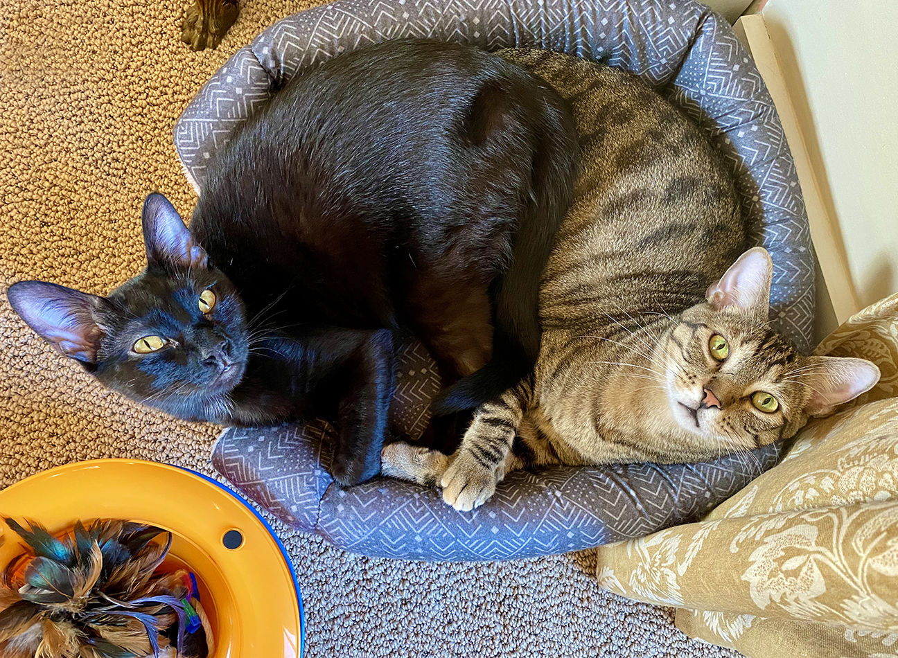 Basepaws cat Joey and Mico cuddling.