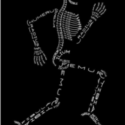 BIOL 140 - muscles, bones, nervous system