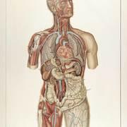 Anatomie et physiologie 2
