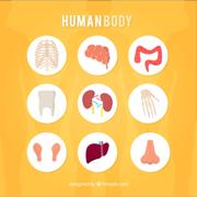 Anatomy UIC 1