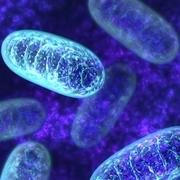 Biologie cellulaire (LBIO1111)