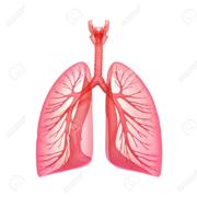 PT Pulmonary Pathology, Diagnosis and Management