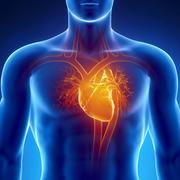 Cardiovascular System (CA)