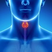 BPM2 - Endocrine