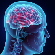 BMP2 - Cranial Nerves