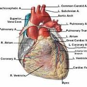 Cardiac Pathologies