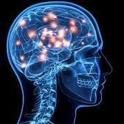 Adult Neuro