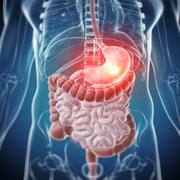 BMP2 - Digestion - Vitamins