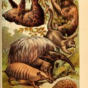 Tennessee Mammalogy