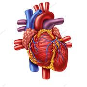 Cardiovascular Revision Cards 2017