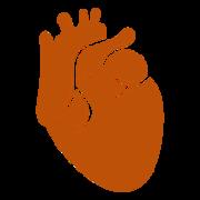 (2) Cardiologia