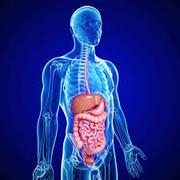 W: Gastroenterologia ja gastrokirurgia
