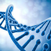 GCSE Biology- AQA
