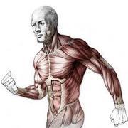3. Practical Anatomy