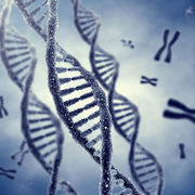 ESA1 Medical Cell Biology and Genetics Evita