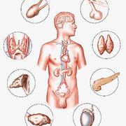 ESA2 Metabolism, Endocrinology and Haematology Evita