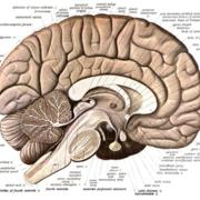Dundee MBChB Neuroanatomy +