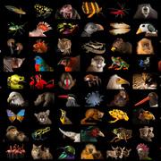 Zoology BIOL 127