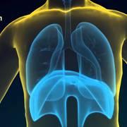 10-24: Respiratoire et organes sensoriels