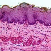 IMS: Microanatomy