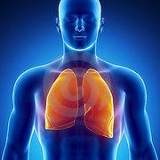 ESA3 Respiratory System