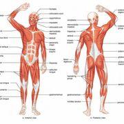 Yr 2 - MSK Anatomy