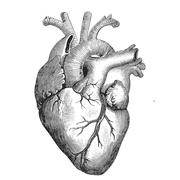 Anatomy (Upper Extremity)