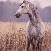Animal Science 103: Equine