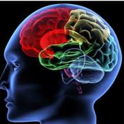 Psychology - Biopsychology