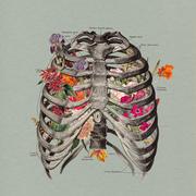 Anatomy Block 3