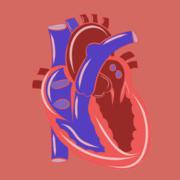 *Medicine: Cardiology & Vascular